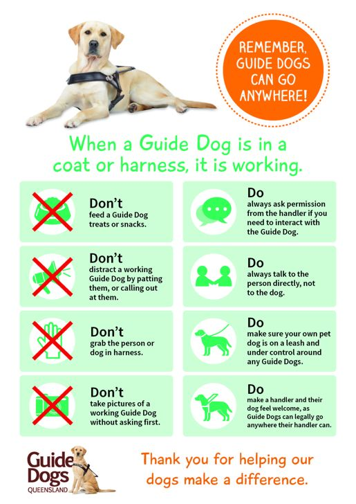 Guide dogs rz